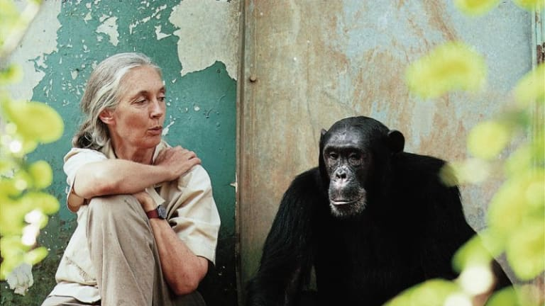 Jane Goodall Turns 80