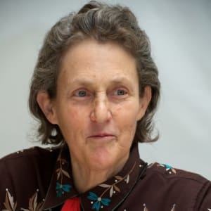 Major Study Led By Autistic Scientist >> Temple Grandin Biologist Scientist Biography