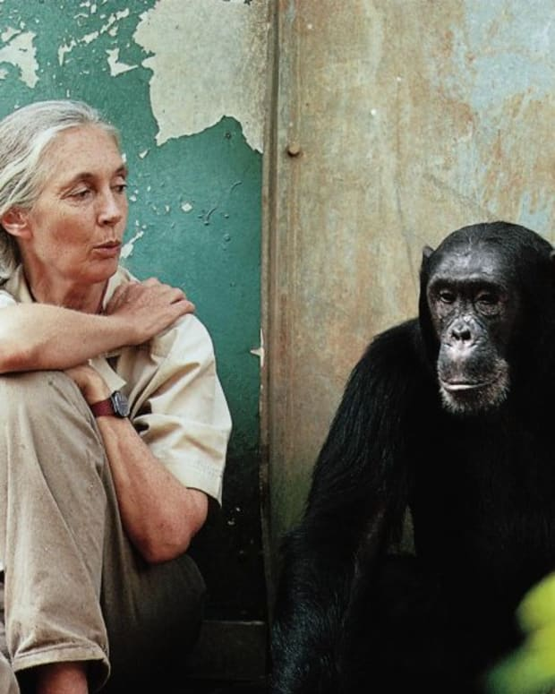 Jane Goodall Chimp Photo
