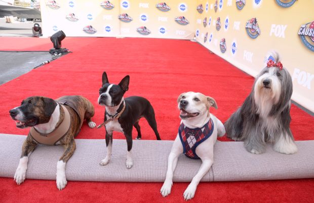 Cause for Paws Red Carpet Photo