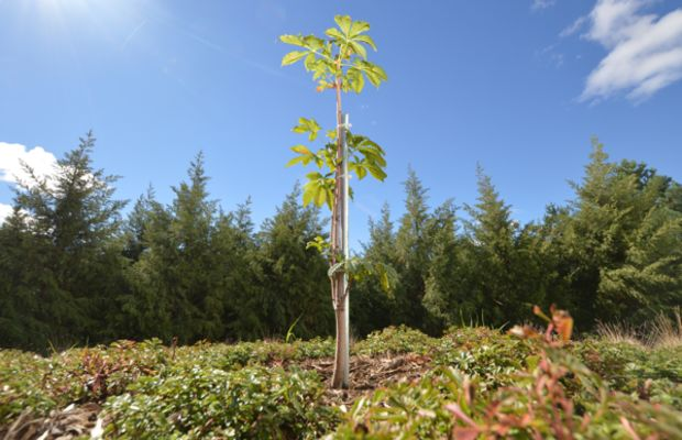 Anne Frank The Sapling Project Photo
