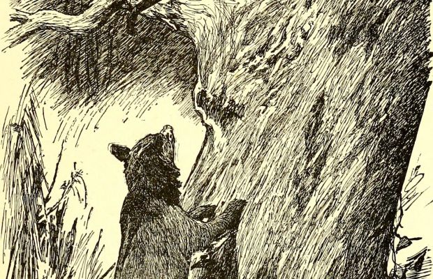 The Jungle Book Illustration Courtesy Internet Archive Book Images via Wikimedia Commons