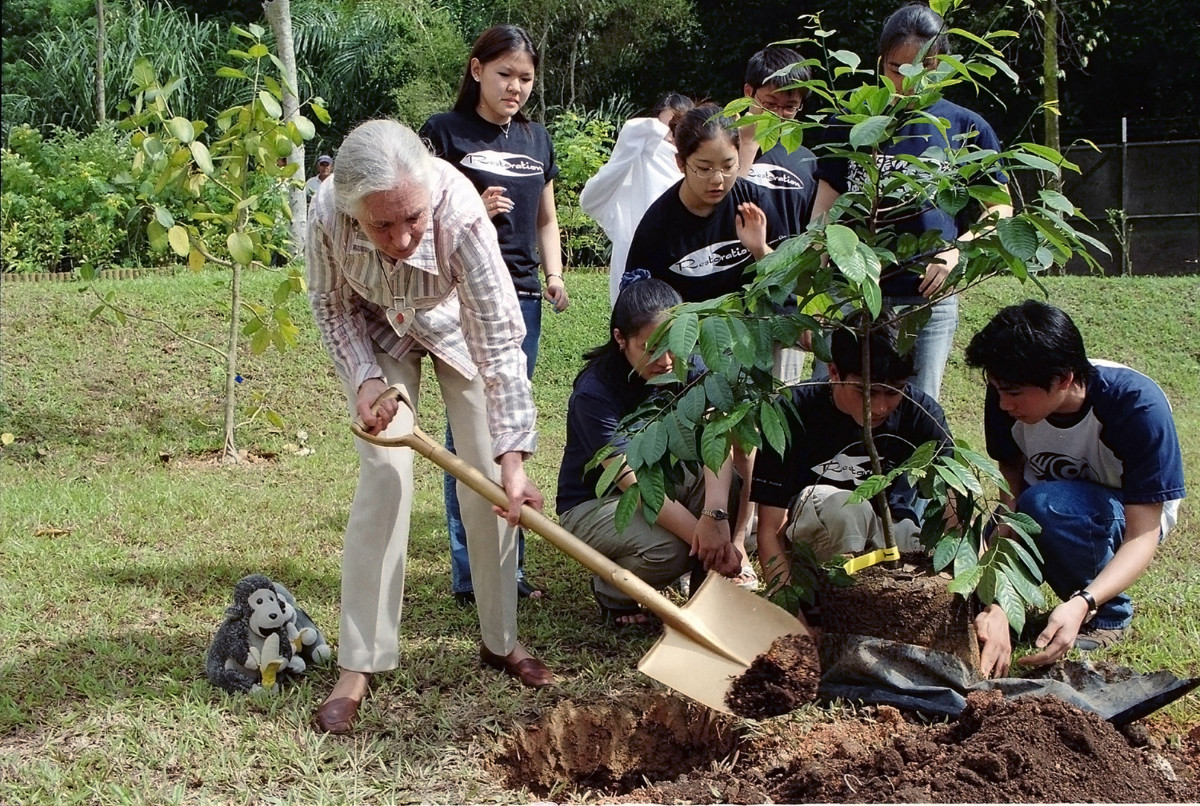 Jane Goodall Roots and Shoots Photo