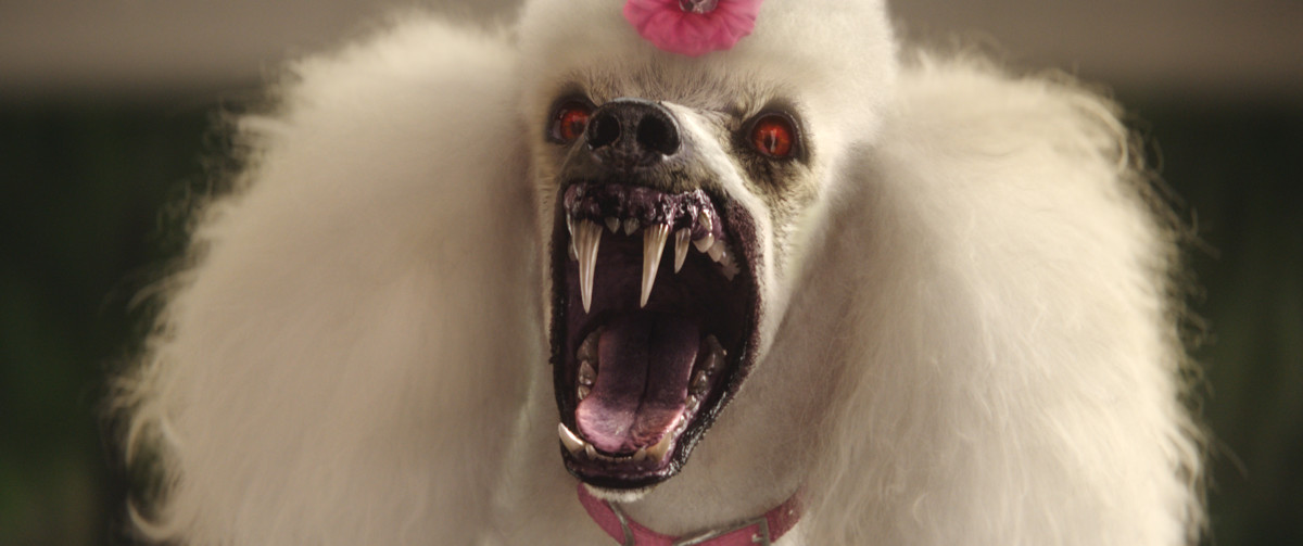 Vampire pooch? You'll see this and a lot more furry scariness in 'Goosebumps.' (Photo: ©2015 CTMG)