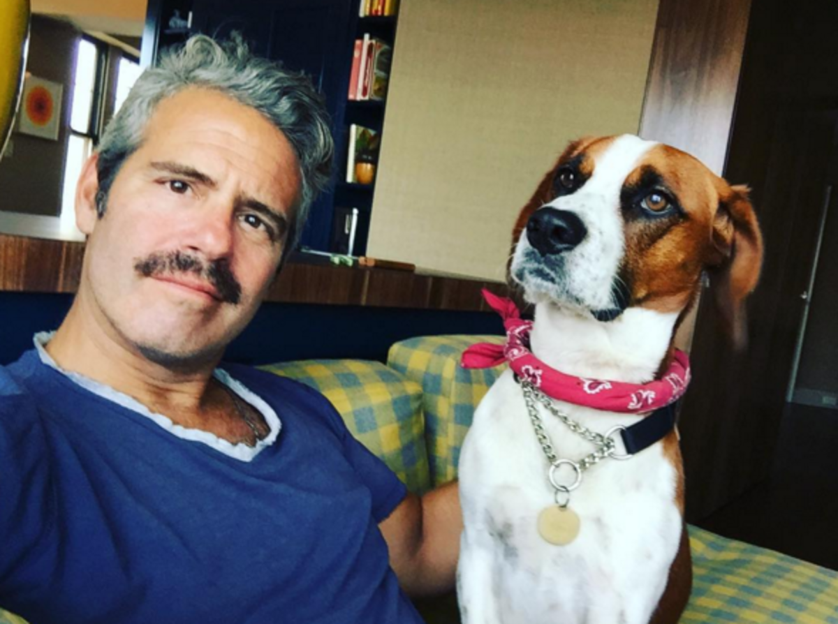 Andy Cohen Dog Instagram Photo