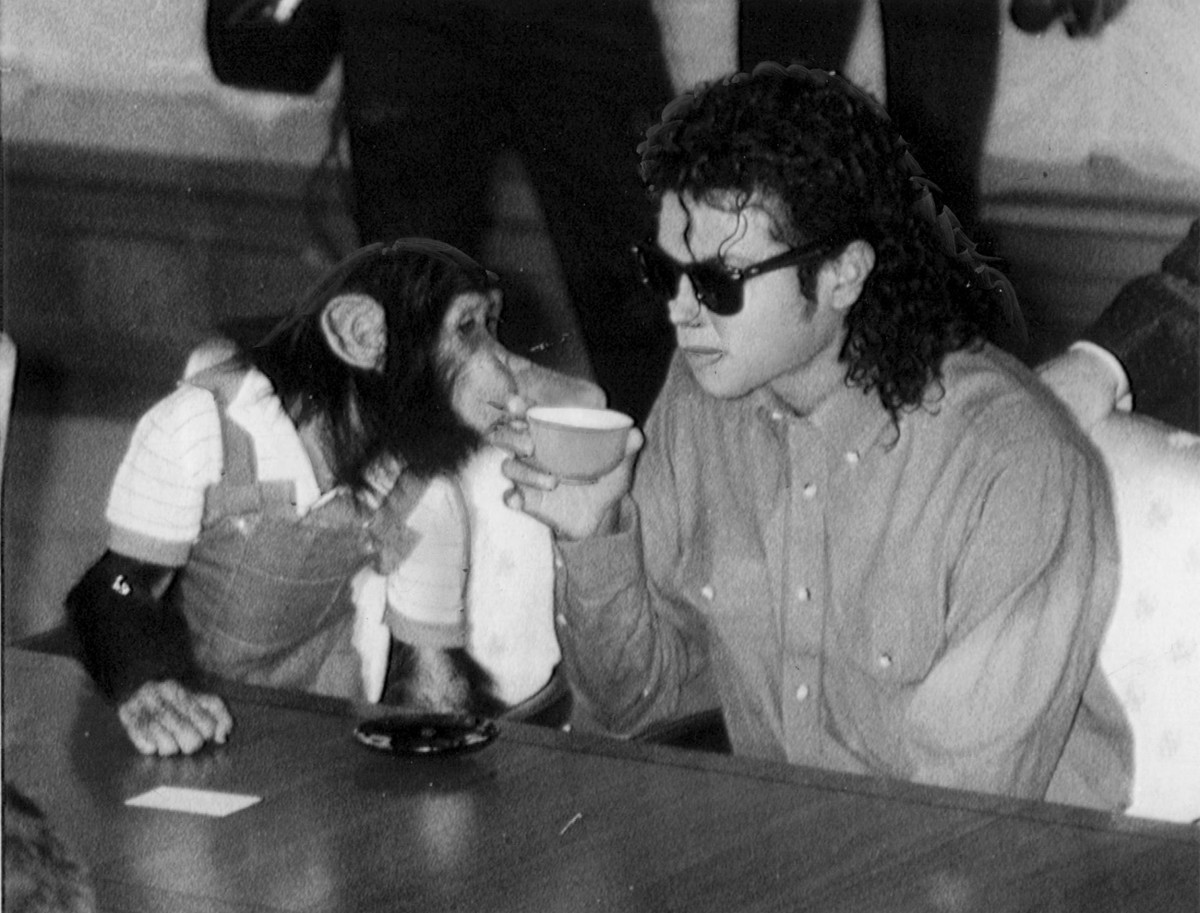 Michael Jackson enjoys a cup of tea with his pet Bubbles at Osaka City Mayoral Hall on September 18, 1987 in Osaka, Japan.