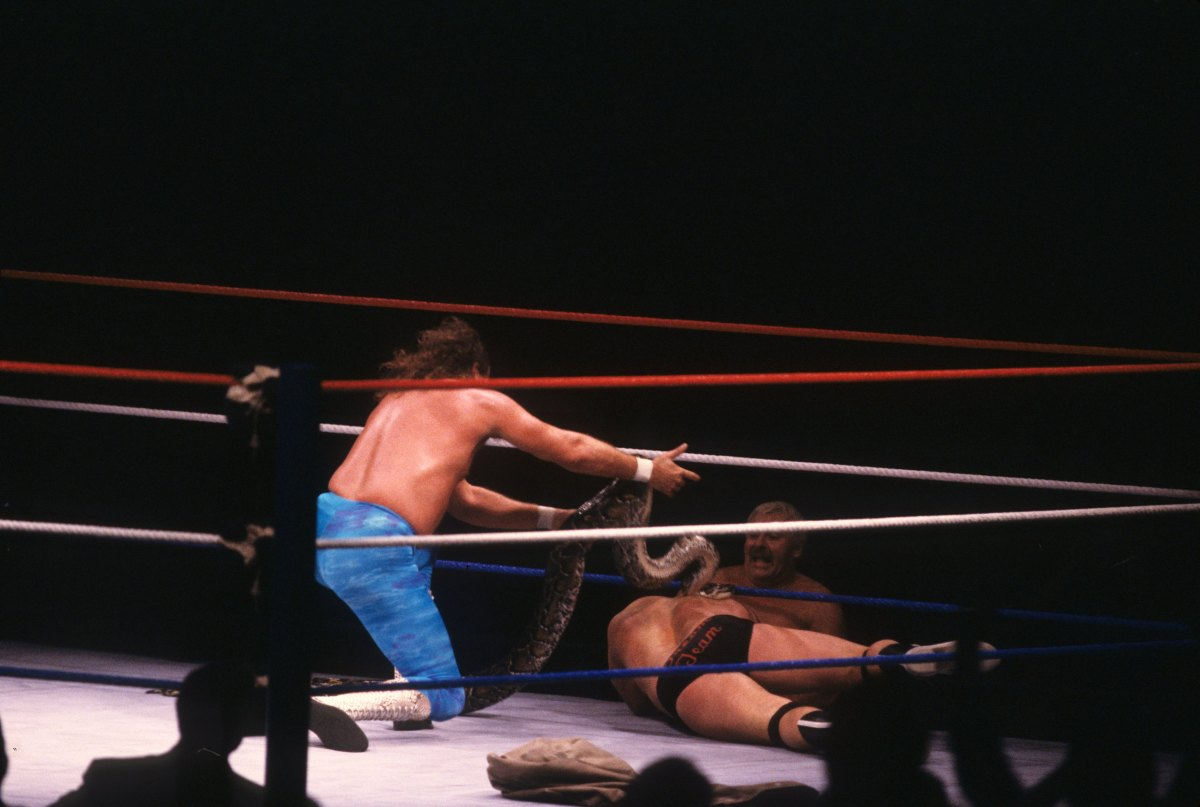 """Jake """"The Snake"""" Roberts puts his snake on Dino Bravo after their match on November 6, 1987, at the Nassau Coliseum in Uniondale, New York"""