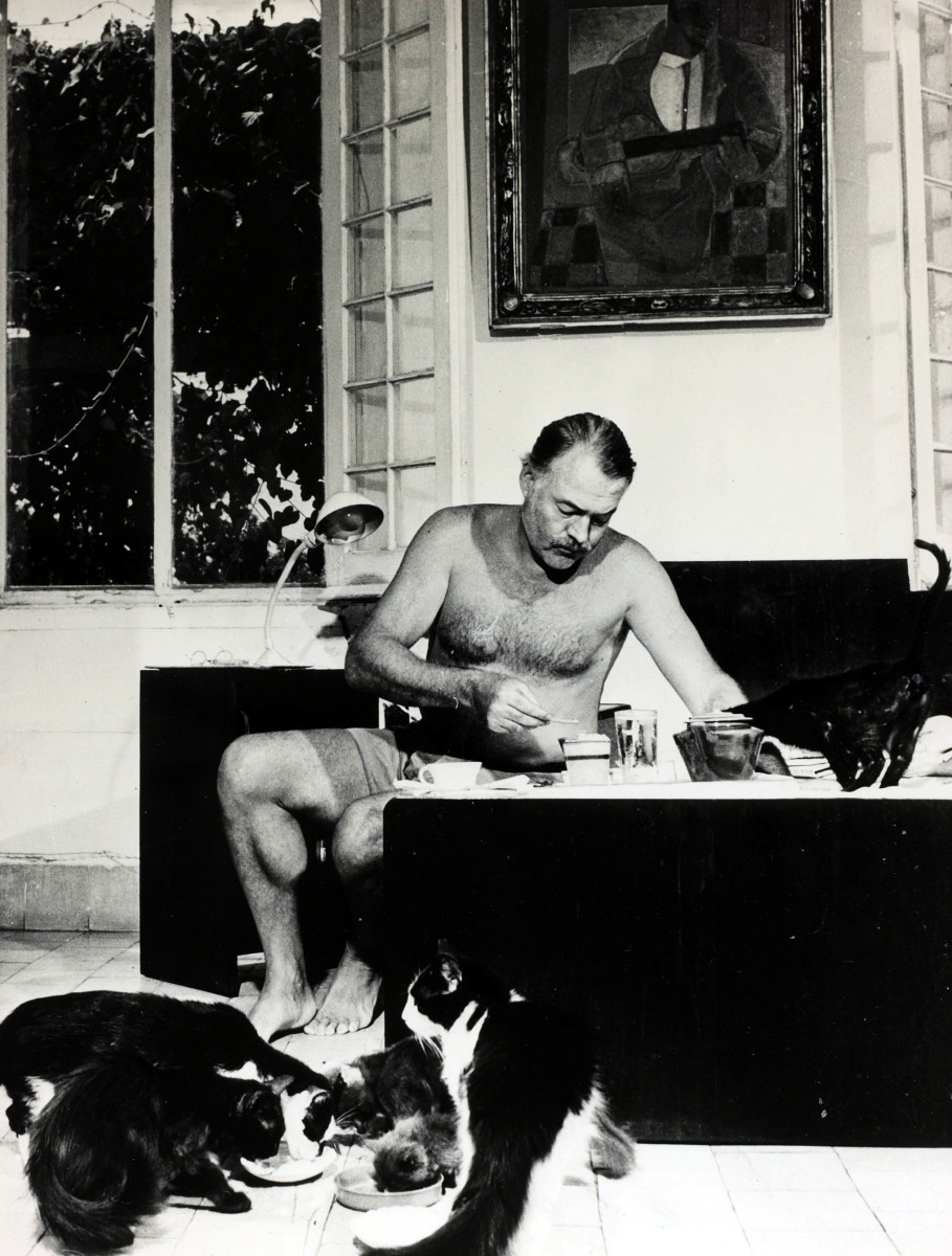 Ernest Hemingway at breakfast with a group of cats feeding at his feet, circa 1940s